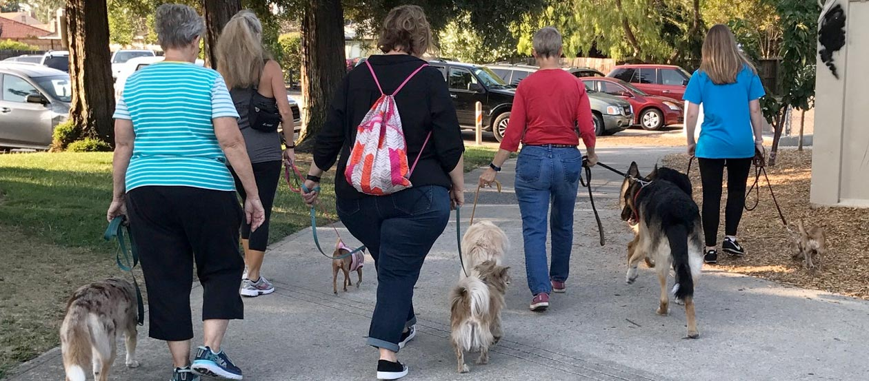 Dogs and owners on a group walk