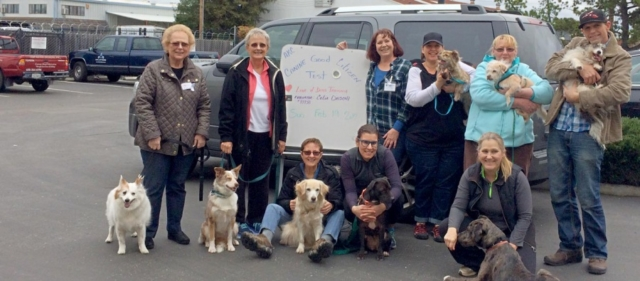 Good Canine Citizen workshop